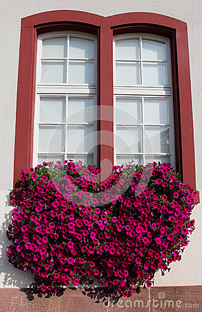 Red petunias in a window flower box