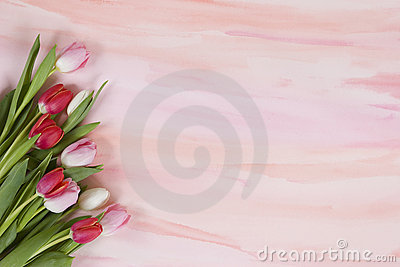 Red and pink tulips on pastel watercolor - spring