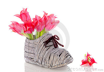 Red pink tulips in a shoe