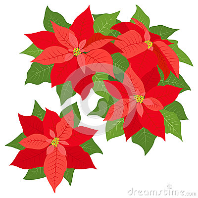 Red poinsettias decorations