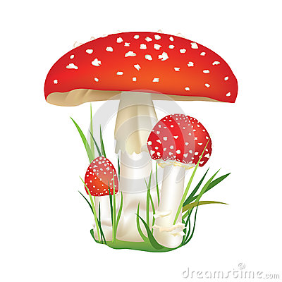Free Red Poison Mushroom Isolated On White Background. Royalty Free Stock Photos - 36135248