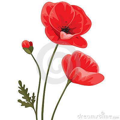 Free Red Poppies Royalty Free Stock Photography - 22979257