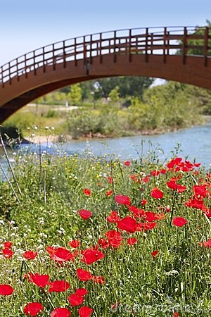 Red poppies flowers meadow river wooden bridge