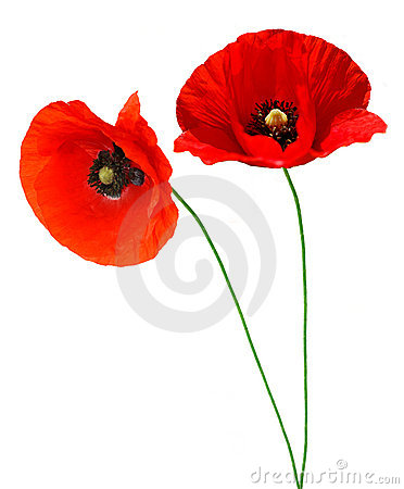 Free Red Poppy Stock Photos - 14895293