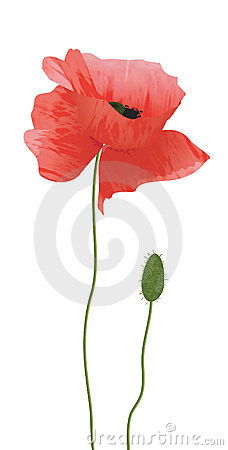 Free Red Poppy Royalty Free Stock Photo - 326905
