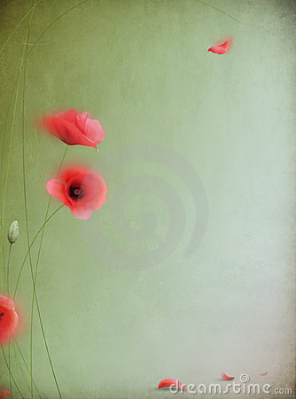 Free Red Poppy Stock Images - 9563564