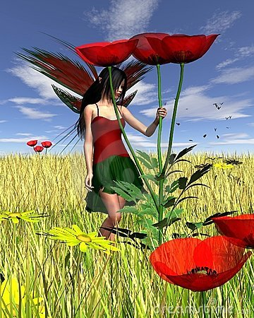 Red Poppy Fairy with Cornfield Background