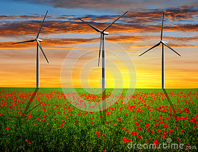 Red poppy field with wind turbines