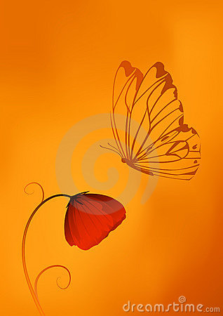 Red poppy flower and a butterfly