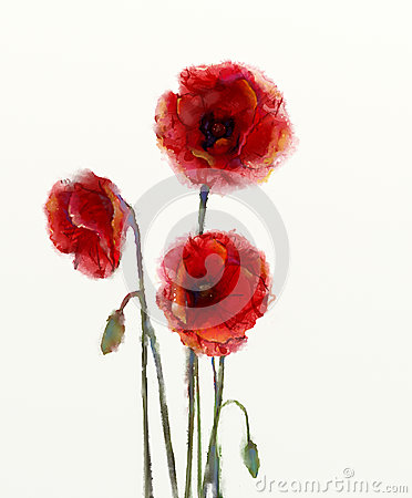 Free Red Poppy Flowers Watercolor Painting Royalty Free Stock Photos - 48888688