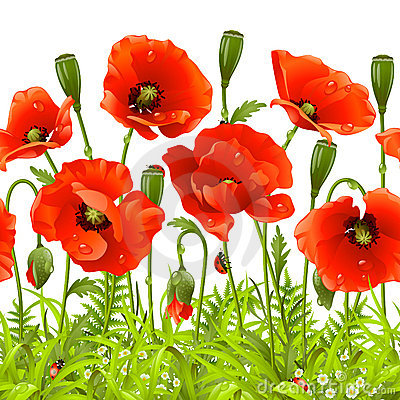 Red poppy. Vector seamless horizontal border