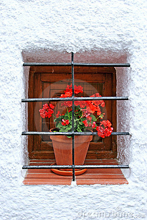 Red potted plant on window sill with bars