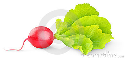 Red Radish Stock Photo - Image: 22829550