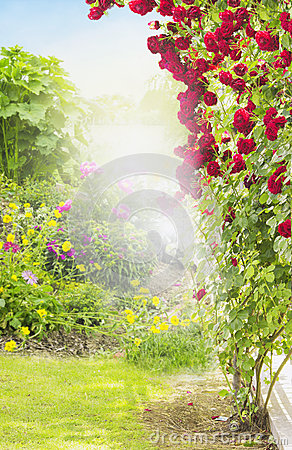 Free Red Rambler Rose In Sunny Garden Royalty Free Stock Image - 44592426