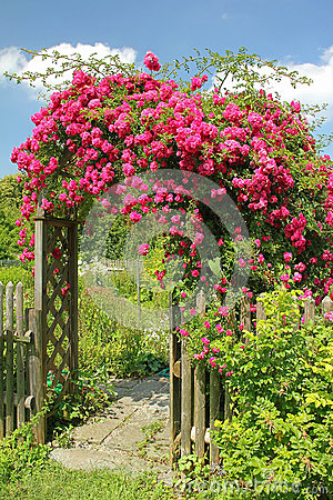 Free Red Rambler Rose On An Arched Garden Entrance Stock Photo - 36113810