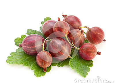 Red ripe gooseberry