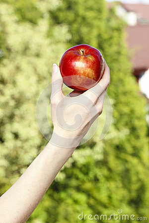 Free Red Ripe Single Apple In Beautiful Hand Royalty Free Stock Photography - 40655027