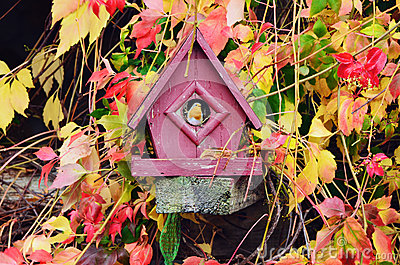 Red Robin in Bird House