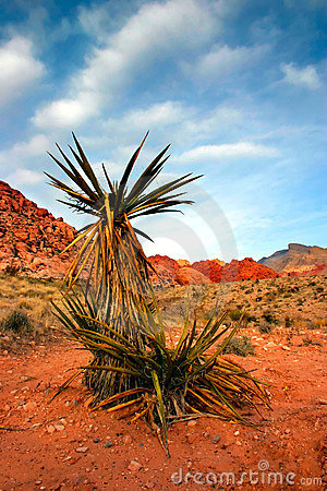 Free Red Rock Canyon, Nevada Stock Photo - 481660