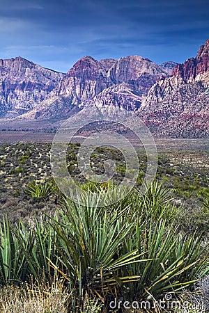 Red Rock Canyon Yucca
