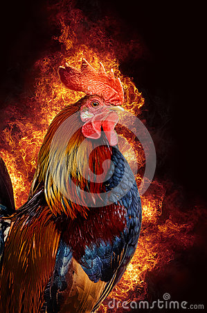 Free Red Rooster In Flame Stock Image - 78597261