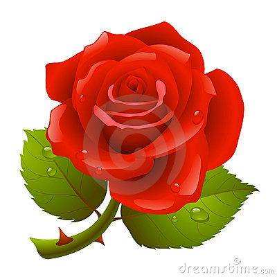Free Red Rose Stock Photos - 12483213