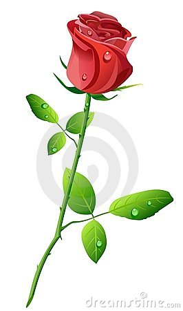 Free Red Rose Stock Image - 5331891