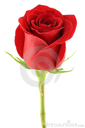Free Red Rose Stock Image - 7232471