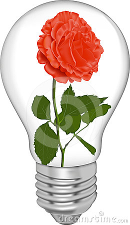 Red rose in a bulb