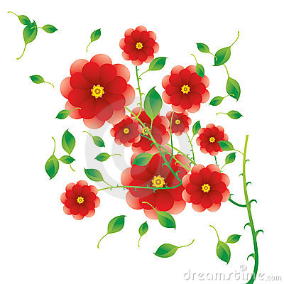Red rose bush detail