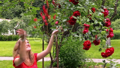 Red rose bush pregnant happy woman throw rose petals in for Gardening while pregnant