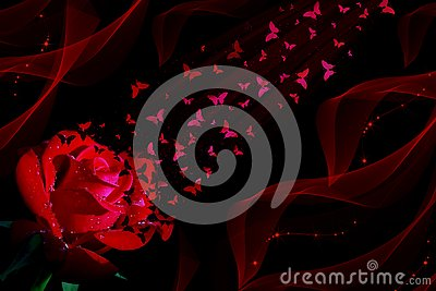 Red rose and butterflies on black background Stock Photo