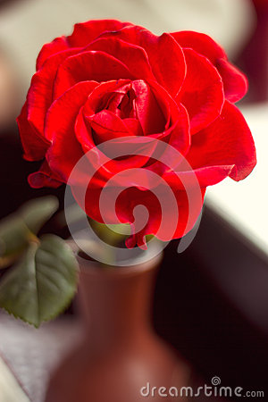 Red rose in a cafe