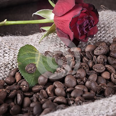Red rose on coffee beans
