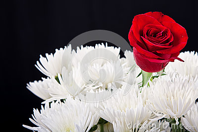 Red rose contrast in white bouqet