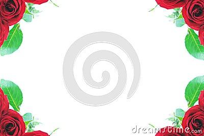 Red rose corner borders