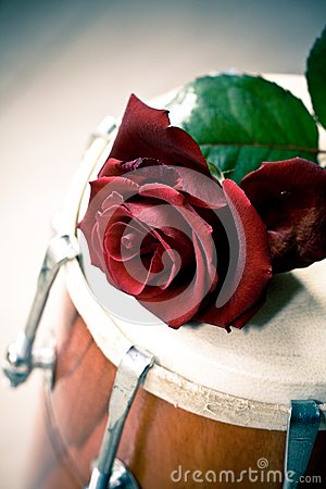 Red Rose on a Dhol drum