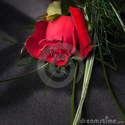 Red Rose on fabric