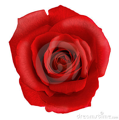 Free Red Rose Flower Stock Photo - 3501860