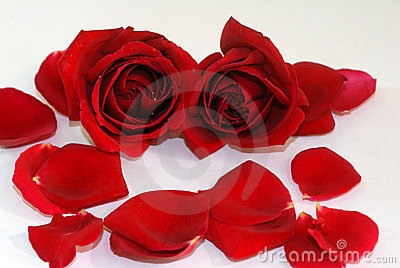 Red Rose flower petals spa aromatherapy