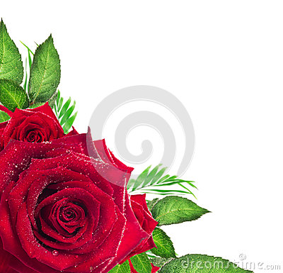 Free Red Rose Flower With Green Leaves On White Background Royalty Free Stock Photos - 48929408