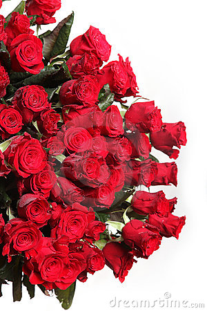 Free Red Rose Flowers Stock Photography - 13138262