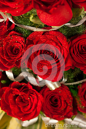 Red rose flowers  with water drops