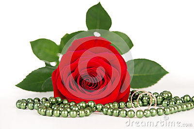 Red rose with gold rings