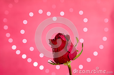 Red Rose with heart bokeh