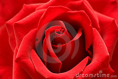 Red Roses Dream Meaning