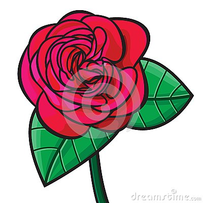 Red rose illustration
