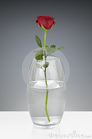 Free Red Rose In A Glass Vase Stock Image - 82660141