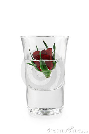 Free Red Rose In Glass Royalty Free Stock Photography - 4628697