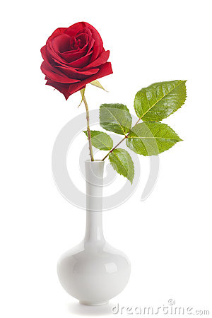 Free Red Rose In White Vase Isolated Stock Image - 55591211